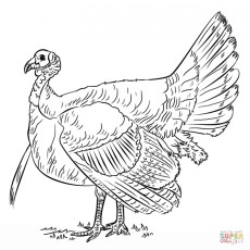 Turkey Coloring Pages Kids Printable 31775