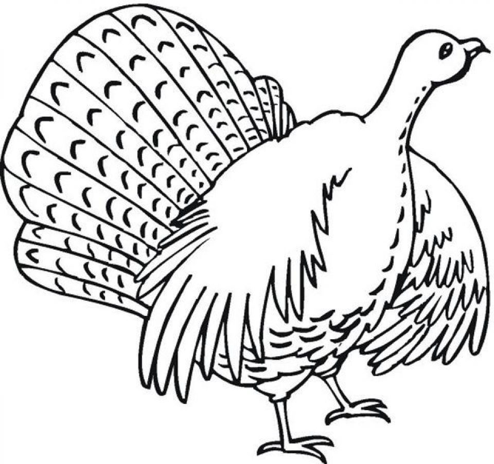 Turkey Coloring Pages Online   47654