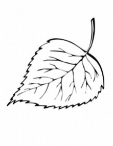Leaf Coloring Pages Free to Print - ycve1