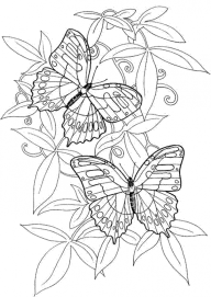 Adult Coloring Pages of Butterfly Printable 9ghj6