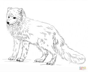 arctic fox coloring pages 73192