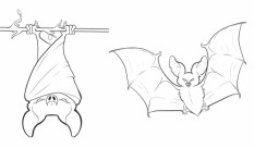 Bat Coloring Pages to Print 17478