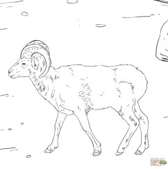 Bighorn sheep coloring pages wat2n