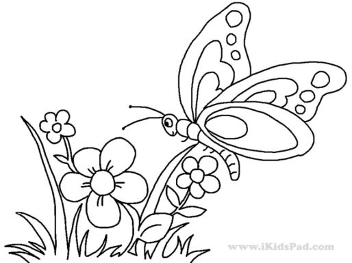 butterfly on flower coloring pages - 893ag