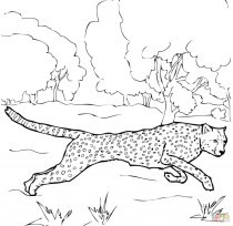 Cheetah Coloring Pages Free to Print 7ag4p