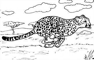 Cheetah Coloring Pages Printable 7nv41