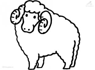 Coloring pages of sheep hdn3k