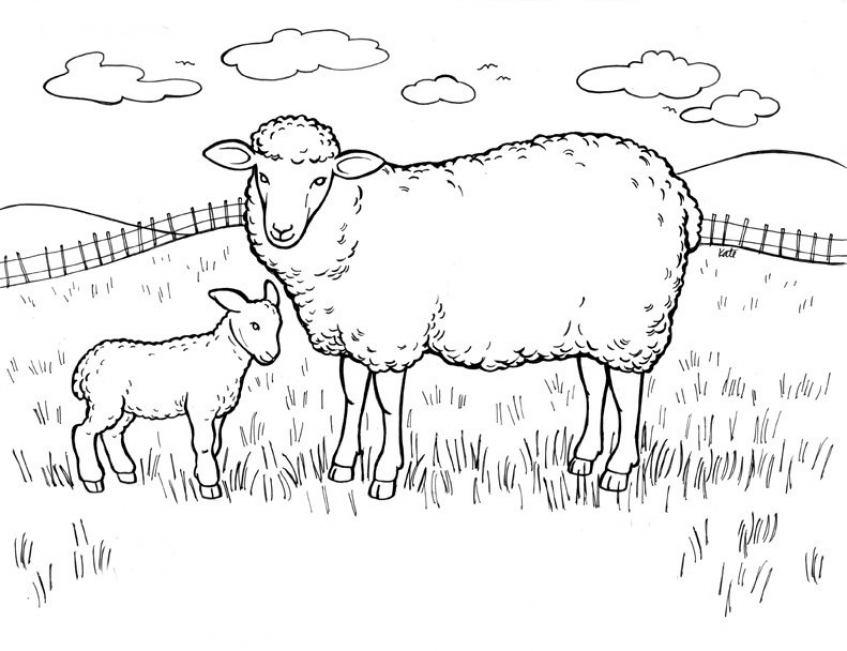 Coloring pages of sheep   yfg4n