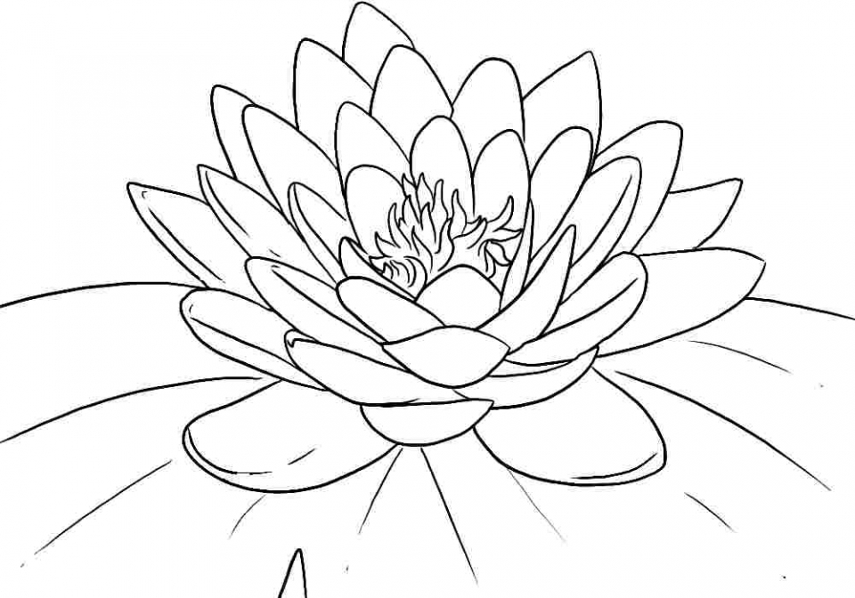 Flowers Coloring Pages Free to Print   2165