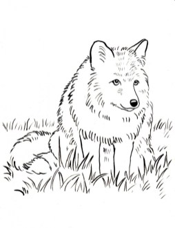 Fox Coloring Pages for Toddlers l9059