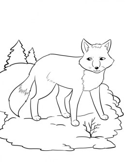 Fox Coloring Pages Printable 72nal