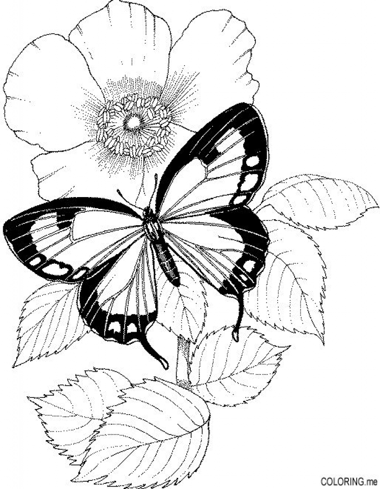 Get This Free Flowers Coloring Pages To Print 1849