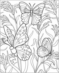 Free Printable Butterfly Coloring Pages for Adults 8hjy0