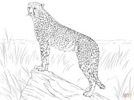 Free Printable Cheetah Coloring Pages at2ml