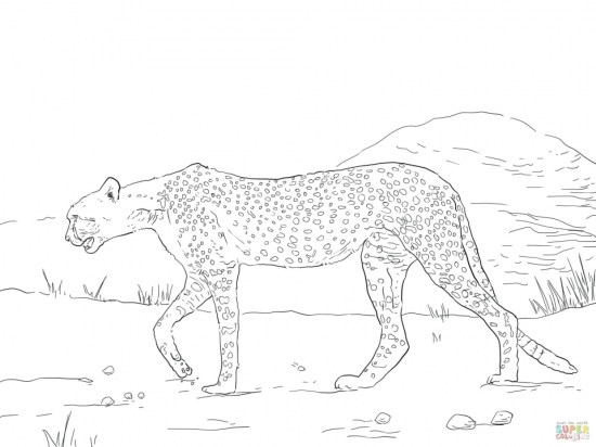 Free Printable Cheetah Coloring Pages bgu5l
