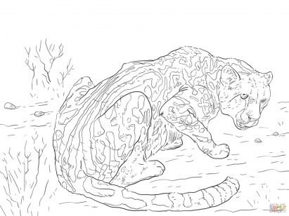 Free Printable Cheetah Coloring Pages tam2l