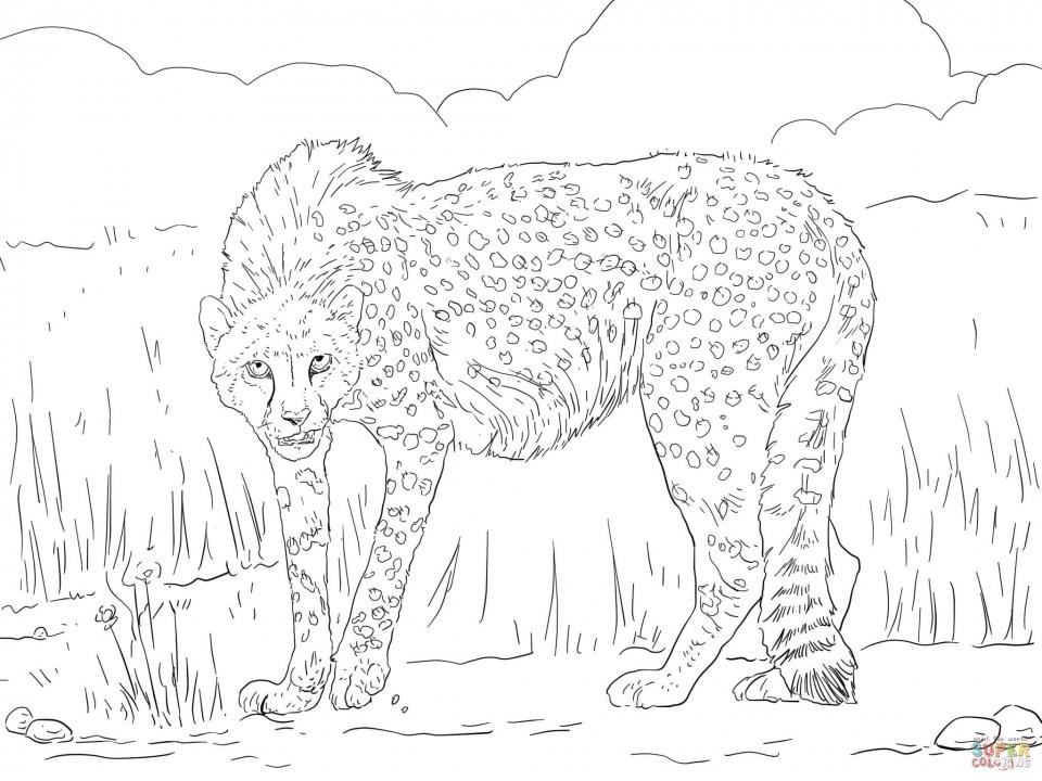 Free Printable Cheetah Coloring Pages   twp29