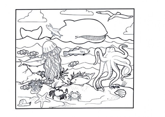 Ocean Animals Coloring Pages 8cb4m