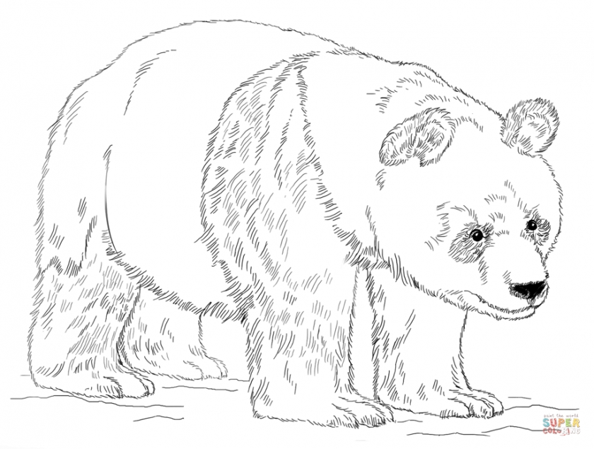 Panda Bear Coloring Pages   ivb48