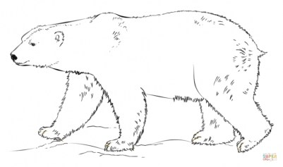 Polar Bear Coloring Pages 9yhq2