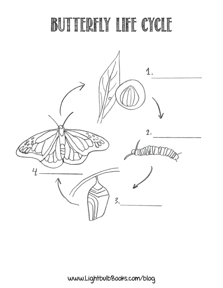 Printable coloring pages butterfly life cycle   89317
