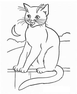 cat coloring pages free vfyw0