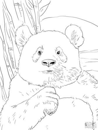 Panda Coloring Pages Free Printable