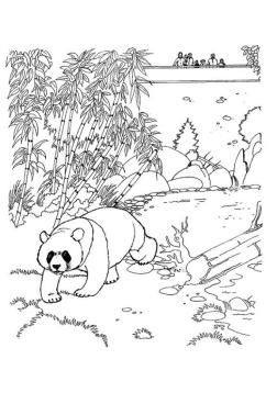 Panda in a Zoo Coloring Pages
