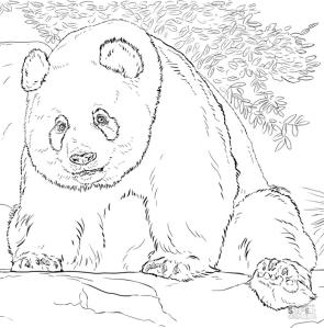Realistic Giant Panda Coloring Pages