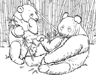 Two Biag Giant Panda Eating Bamboos Coloring Page