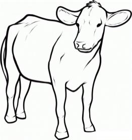 Cow Coloring Pages Free Printable Baby Cow Picture for Kindergarten