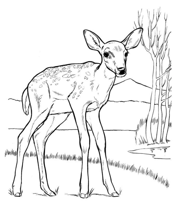 Deer Coloring Pages to Print A Lone Deer in Savanna