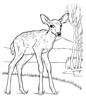 Deer Coloring Pages to Print A Lone Deer in Savanna