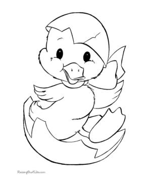 Duck Coloring Pages Cute Duck Hatchling
