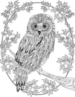 Free Owl Coloring Pages for Adults be27