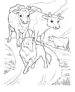 Realistic Cow Coloring Pages Printable Cows and Shepherd Dog