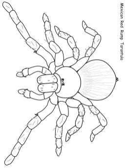 Spider Coloring Pages Printable mt80