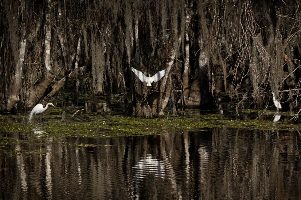 "Florida Voters Pass the ""Polluter Pays"" Amendment (Florida Constitution, Art. II, Sec. 7)"