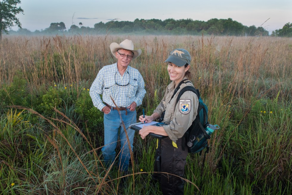 USFWS Southwest Region biologist Dr Erin Myers and Florida rancher Lefty Durando survey potential habitat for the critically endangered grasshopper sparrow. Working ranches in the Lake Okeechobee Basin and Everglades Headwaters provide habitat for threatened and endangered wildlife while serving an important role in restoring the Everglades. The Everglades Headwaters National Wildlife Refuge and Conservation Area provides an opportunity to protect this landscape and is a national example for public partnerships with private landowners.