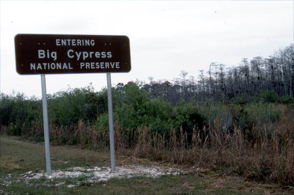 The U.S. Department of the Interior Establishes Big Cypress National Preserve