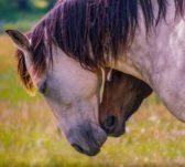 AnnKechter-HorseHearts-L1winner0219