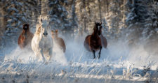 EllenNelson-Open Horse Frost-RCrunup0519