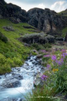 EllenNelson Landscape RCrunup0818