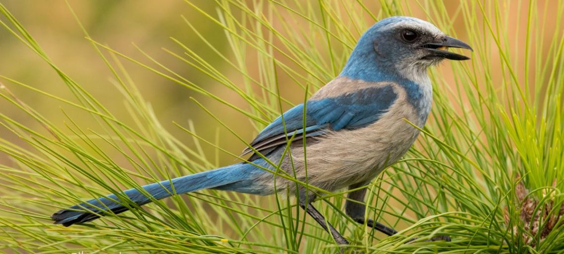 The Art of Bird Photography: a Hands-on Workshop