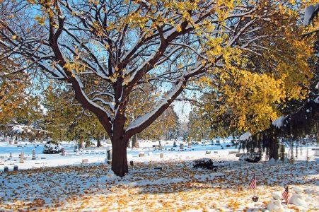 Cemetery grounds in November