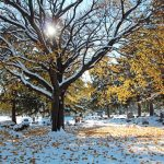 snow in November on Cemetery grounds