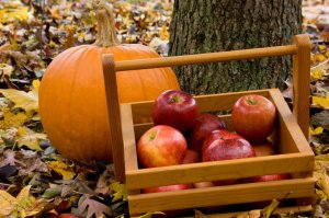 2015.10.06.applepicking-12151-994x661