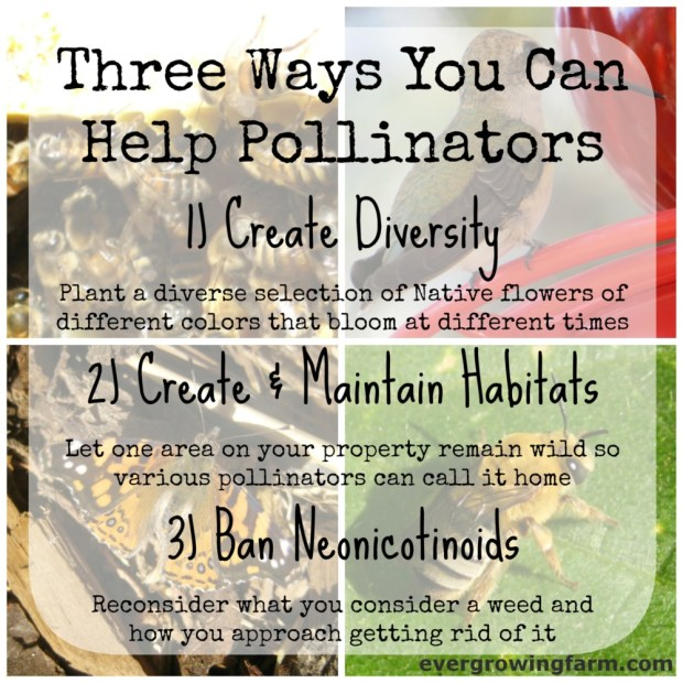 3 Ways to Help Pollinators