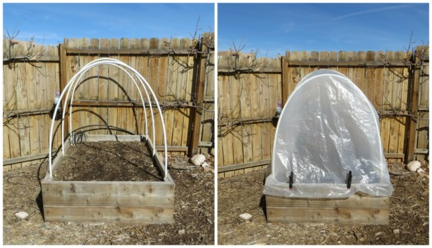 Hoop House-before and after