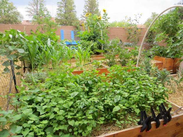 The Benefits of Urban Farming